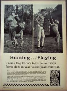 1965 Purina Dog Chow hunting dog vintage dog food ad