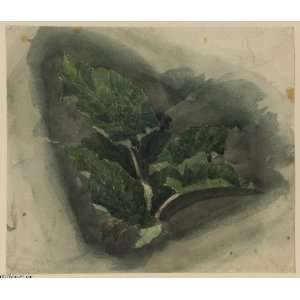 Reproduction   David Cox   24 x 20 inches   Plant Study 1 Home