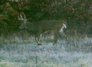 Land   Springs   Gun Deer Hunting   New Barn / Cabin/OBO