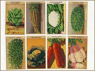 96 Vintage French Flower & Veg Seed Labels All Diffnt