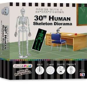 Skullduggery Cast and Paint Human Skeleton Diorama Kit